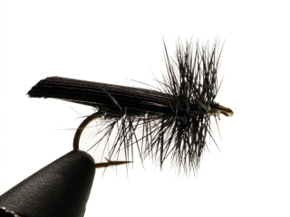 Sedge Black