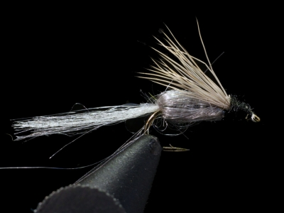 Emergent Sparkle Pupa Grey